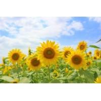夏季休暇のお知らせ(8月11日〜8月17日)について