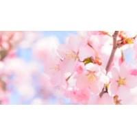 社内研修に伴う営業時間変更のお知らせ(4月1日)について